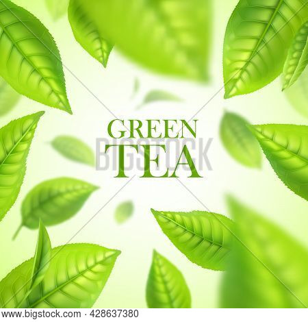 Green Tea Leaves. Organic Herbal Background With Realistic Vector Falling In Air, Floating In Water