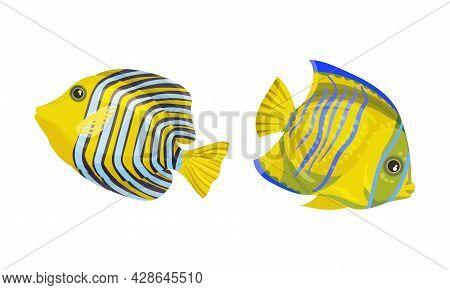 Tropical Fish For Freshwater And Saltwater Aquarium Vector Set