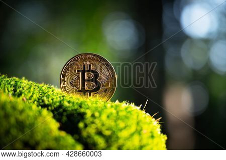 Golden bitcoin coin on lush green moss in summer forest. Eco-friendly cryptocurrency concept