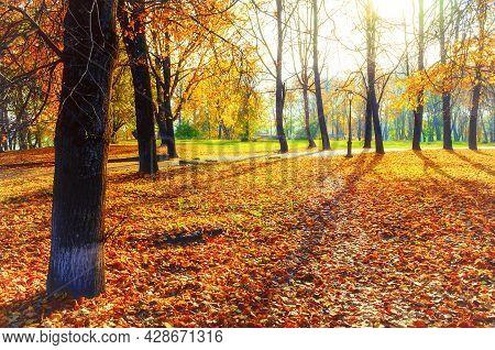 Autumn landscape, autumn city park and orange fallen autumn leaves on the foreground. Autumn park in sunny morning, autumn sunny landscape, autumn park trees, autumn trees in sunny autumn morning