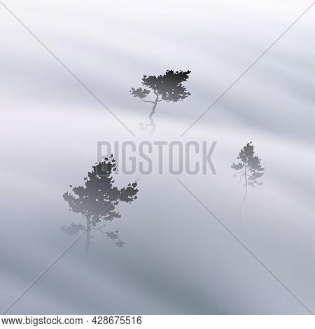 Pine Trees. Foggy Clouds. Fog Waves. Morning Mist. Natural Landscape