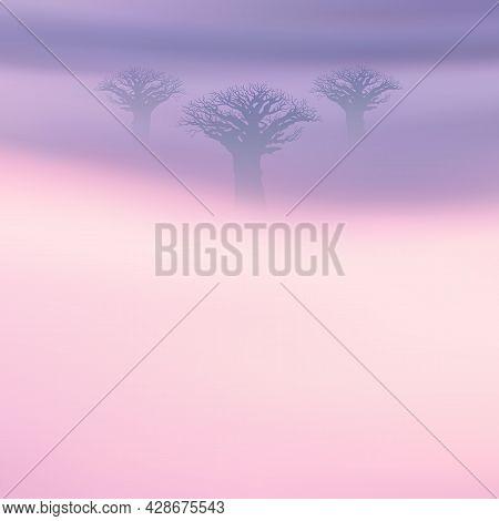 Baobab Tree. Foggy Clouds. Fog Waves. Morning Mist. Natural Landscape