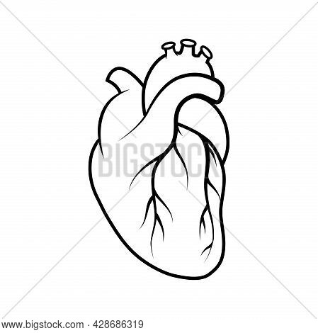 Medical Human Heart Icon. Outline Medical Human Heart Vector Icon For Web Design Isolated On White B