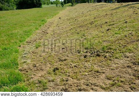 Lawn In One Half Uncut With Clover In The Other Half Regularly Mown To A Low Stalk Height. The Contr