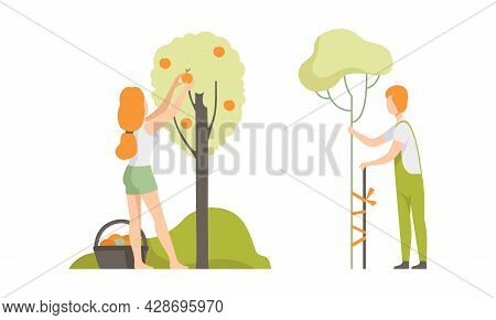 Young Woman Gathering Fruit From Tree And Man Supporting Plant Engaged In Horticulture Vector Set