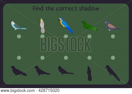Matching Children Educational Game With Parrots - Budgies, Cockatiel, Macaw, Eclectus, Bronze Wing P