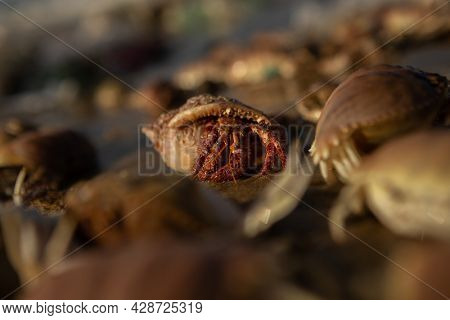 Group of hermit crab on the beach. Focus on one crab