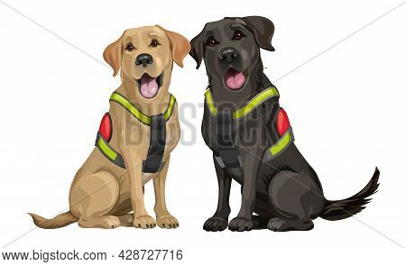 A Team Of Rescue Dogs, A Yellow And Black Young Labrador Retriever, Dogs For Searching People Under