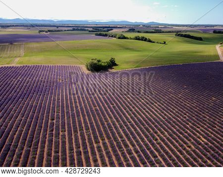 Touristic Destination In South Of France, Aerial View On Colorful Lavender And Lavandin Fields In Bl