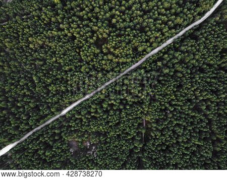 Aerial Top View Of A Country Road Through A Fir Forest In Summer In Rural. Pine Forest From Above. R