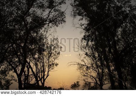 Sunset In The Forest. Sunset And Trees.silhouette Trees. Dusk Sky. Forest Trees. Orange Sky During S