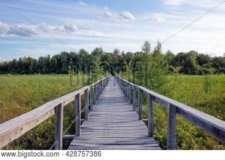 Boardwalk Wood Path In Nature Marsh Long Wooden Pathway Landscape