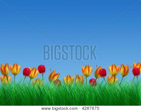 Green Grass And Tulips The Blue Sky