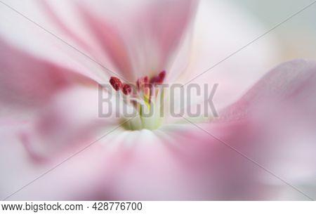 Pink Flower With Pistil In Focus, Blurred Petal. Macro Shooting