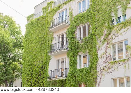 The Multi-storey Building Is Covered With Wild Grapes. A Multi-storey Building Is Planted With Green