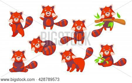 Funny Red Panda Flat Pictures Set For Web Design. Cartoon Cute Chinese Bear Character In Different P
