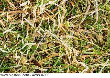 Close Up Of Grass With Ice, Morning Spring Frosts, Spring Awakening.