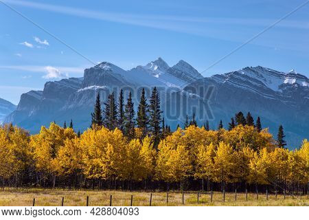 The first snow has already fallen on the peaks. The yellow foliage of birches and aspens is mixed with green conifers. Great Canadian Rockies. Scenic shores of Abraham Lake.