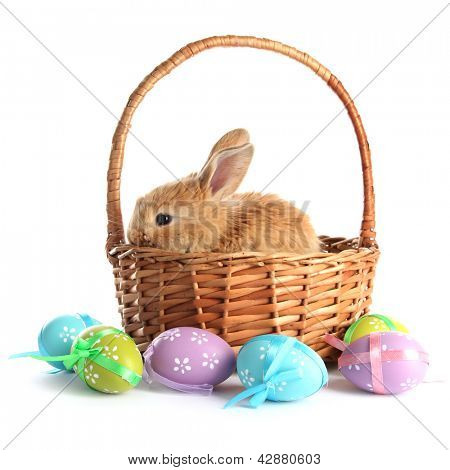 Fluffy foxy rabbit in basket with Easter eggs isolated on white poster