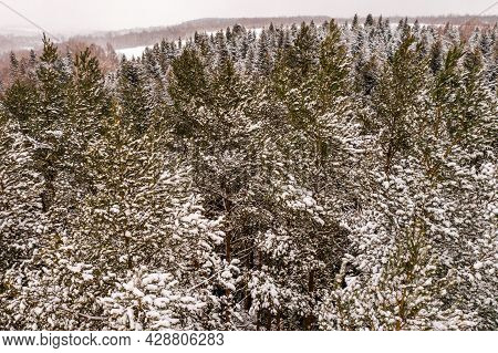 Winter Evergreen Forest, Nature View From Aerial View, Snow-covered Trees.