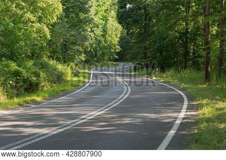 A Dense Deciduous Forest Through Which It Runs Through A Dense, Deciduous Forest. Dense Bushes Grow