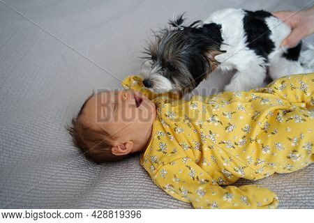 The Dog Looks With Curiosity And Sniffs The Newborn Baby