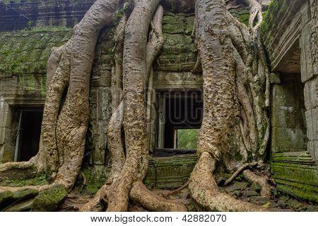 Tree Roots Around Window