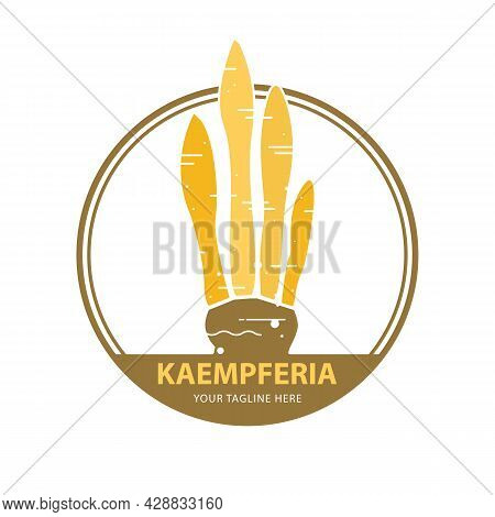 Kaempferia Plant Logo. Thailand Herbal Medicine Plant Concept, Icon Vector Illustration.