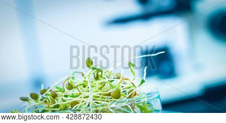 Young plant sprouts. Raw Green Organic plant Microgreens. For making fresh salads. detox, diet. seedlings. Research in microbiological lab of content pathogenic bacteria