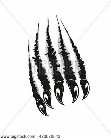 Grizzly Bear Claw Marks Scratches. Predator Animal, Monster Or Wild Beast Sharp Claws Ripping Paper