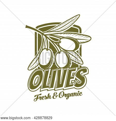 Fresh Olives Icon, Organic Food Product Vector Symbol. Extra Virgin Olive Oil Bottle Tag With Green