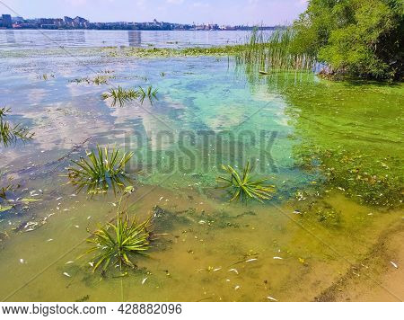 Dirty Blue And Green Water In Reservoir. Contamination By Toxic Algae. Environmental Pollution. Ecol