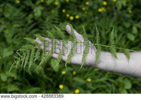 Unrecognizable Woman Holding Lady Fern (athyrium Filix-femina) Leaves In Her Hand. Female Hand With