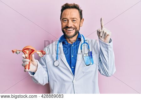 Middle age gynecologist man holding anatomical model of female genital organ smiling with an idea or question pointing finger with happy face, number one