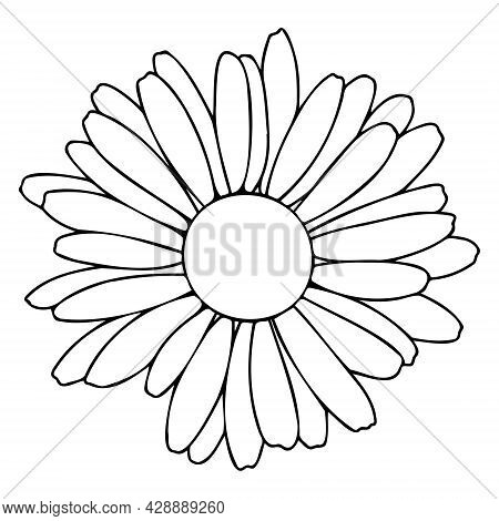 Gerber Or Daisy In The Doodle Style. Gerbera Has A Black Outline.
