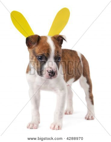 Brown And White Puppy With Bunny Ears