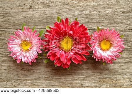 A Beautiful Composition For Greeting Cards Made Of Flowers-asters Or Daisies On An Old Wooden Backgr