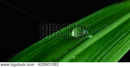 Extreme close up of water droplet on the green leaf. Extreme details from the nature.
