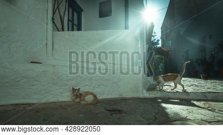Street cats on the streets of the island of Hydra in the Aegean Sea, Greece.