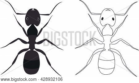 Ant Or Formicidae Vector Illustration Fill And Outline Isolated On White Background. Insects Bugs Wo