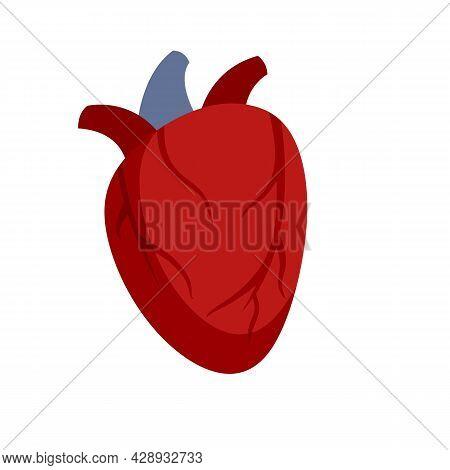 Cardiac Human Heart Icon. Flat Illustration Of Cardiac Human Heart Vector Icon Isolated On White Bac