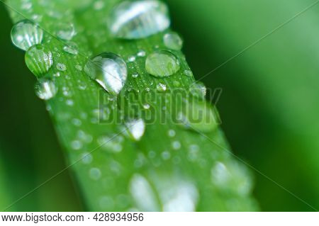 Grass With Rain Drops Macro. Fresh Green Leaves. Morning Dew, After The Rain, The Sun Shines On The