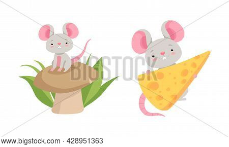 Cute Grey Mouse Character Sitting On Mushroom And Carrying Cheese Slab Vector Set