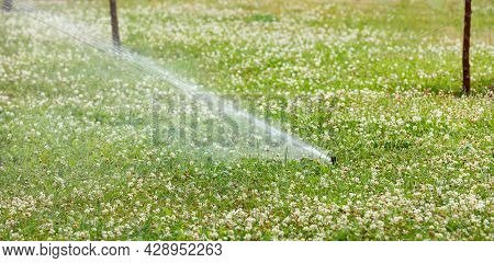 An Automatic Sprinkler Irrigation System Irrigates The Green Lawn Overgrown With Lush White Clover.