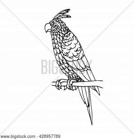 Sitting Parrot With A Crest, Tropical Bird, For Decorative Ornaments, Vector Illustration With Black