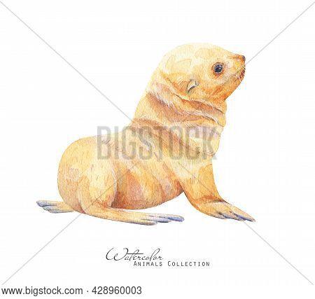 White Seal Watercolor Illustration. Seal Pup  Portrait