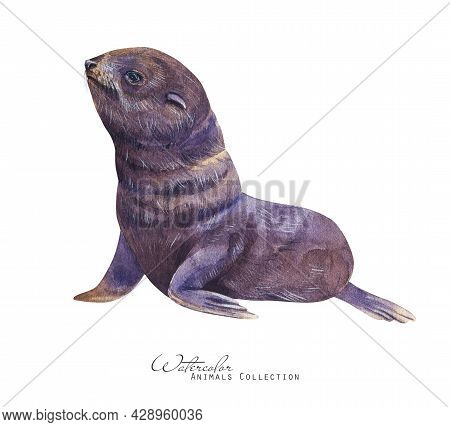 Baby Fur Seal Watercolor Illustration. Seal Pup Portrait