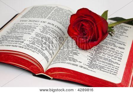 Solomon's Rose