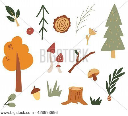 Set Of Forest Items. Stumps, Trees, Branches, Mushrooms, Leaves And Berries. Harvest. Decorative Des