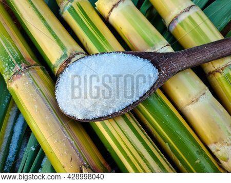 Sugar cane, fresh piece of sugar cane, Sugar cane agriculture